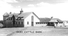 Dairy Cattle Barn, ca. 1920