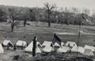 Tents at Camp Mcfarland, circa 1919